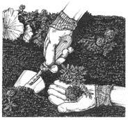 gloves/planting
