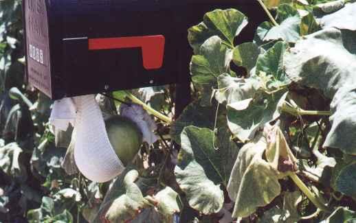 mailbox gourd