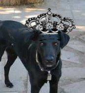 Sir Blacky